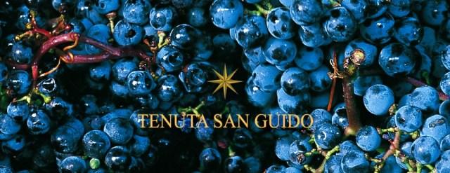 Tenuto San Guido; tenutasanguido.com