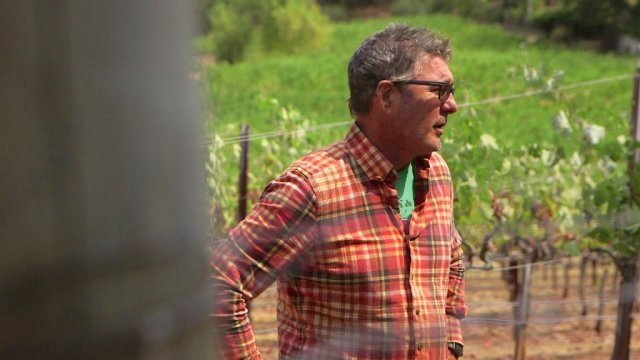 Ray Hannigan stands in Green and Red Vineyards in St. Helena. The winery is using sunscreen to protect the grape harvest against excessive heat.