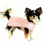 Ozzie modeling for Toybox Yorkies Hand Made Sweaters