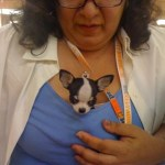 Ada Nieves & Mojito at Pet Fashion Week, New York City
