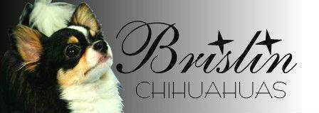 Brislin Chihuahuas Logo