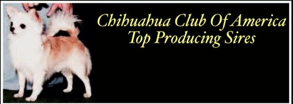 Chihuahua Club of America Top Producing Sires, featured chihuahua is Ch. Ouachitah Beau Chiene