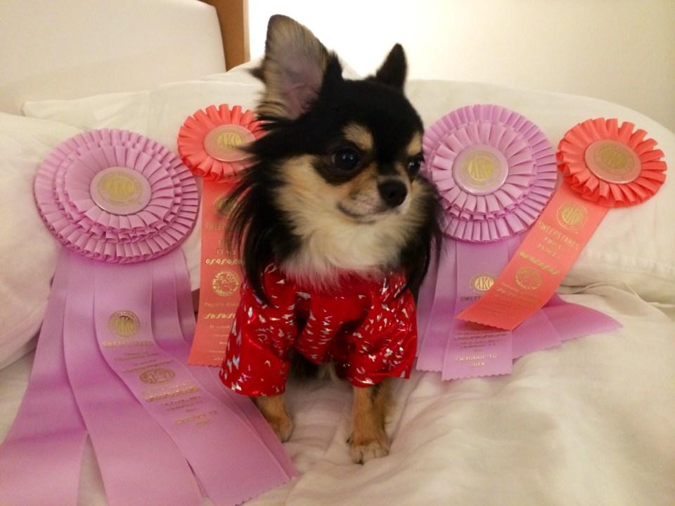 Macho wearning a Slicker Coat for dogs