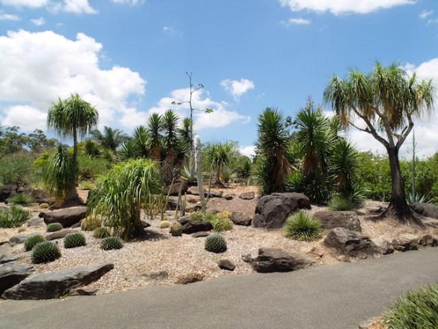 mount coot-tha botanic gardens
