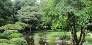 Mt Coot-tha gardens Japanese