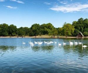 The lake at St James' Park, London