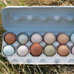 Pastured Organic Eggs (1 dozen)