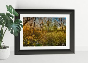 plant pot and frame golden dawn