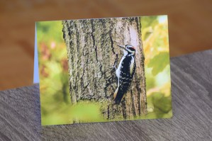 hairy woodpecker at rouge park greeting card by Brithikesontario