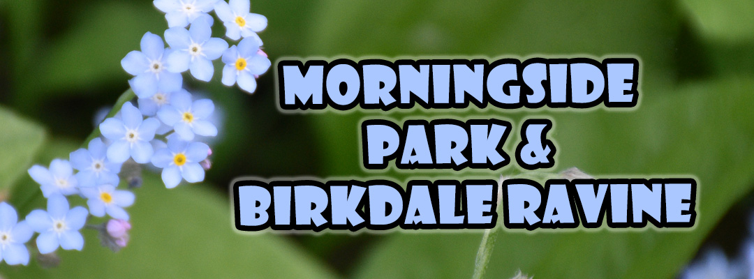 morningside park and birkdale ravine
