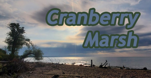 cranberry marsh header