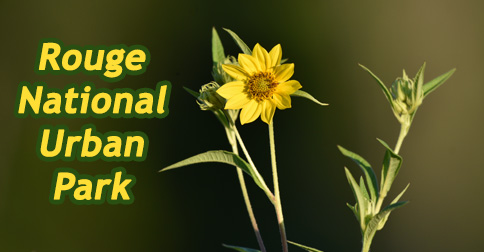 rouge national urban park header 2