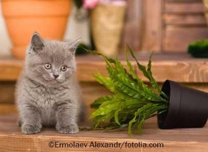 Katze und Pflanze