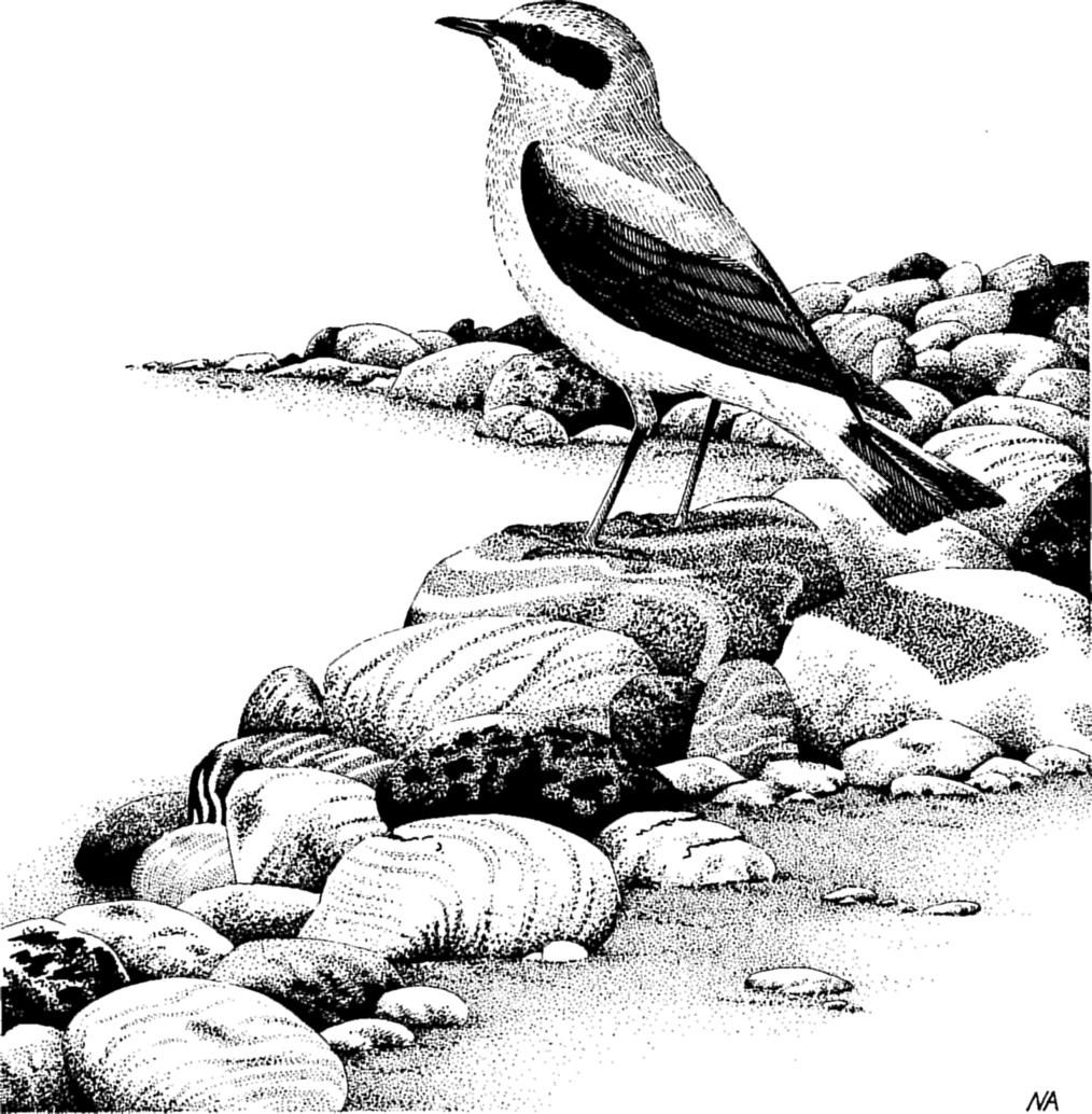 Bird Illustrator of the Year' and 'The Richard Richardson