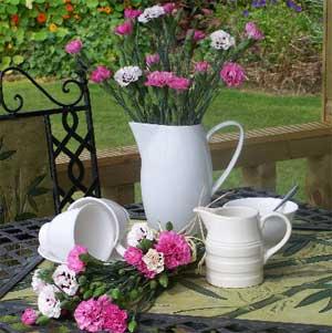 Cornish Country Flowers