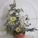 Calendula arrangement in squash