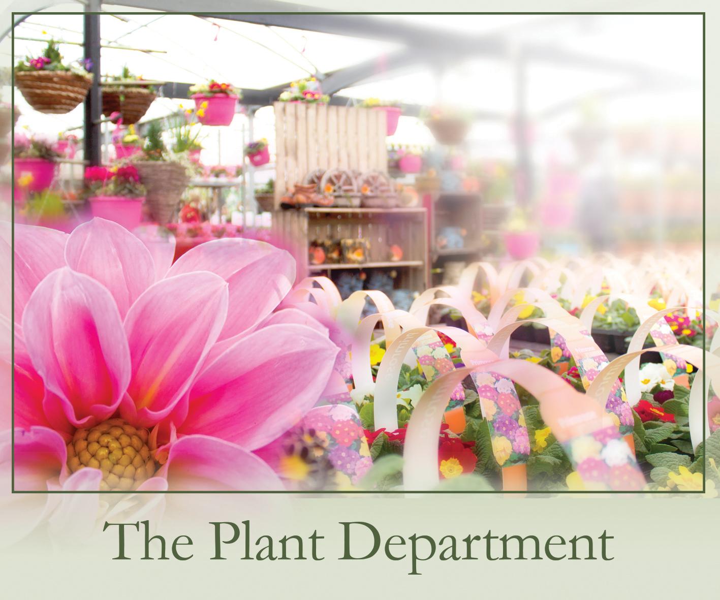 garden furniture, garden shop, garden tools