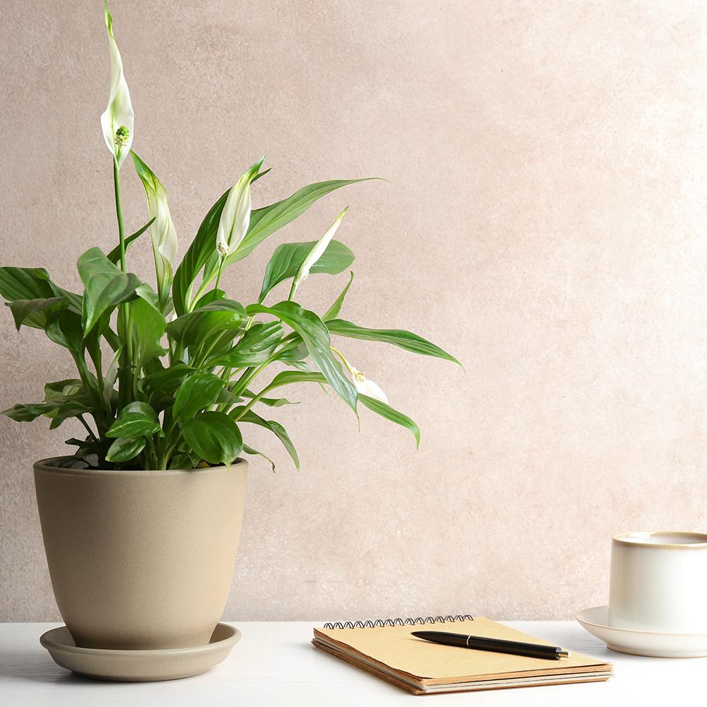 Autumn Plants Department