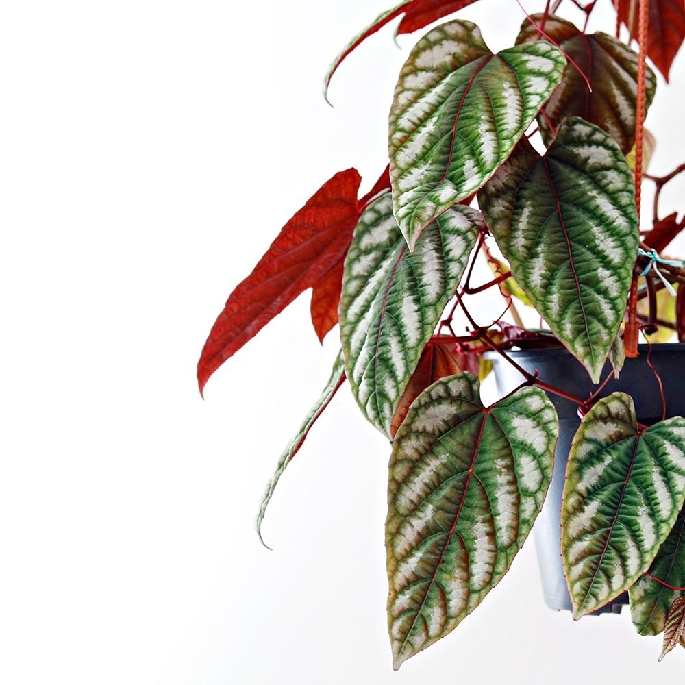 House Plants Department