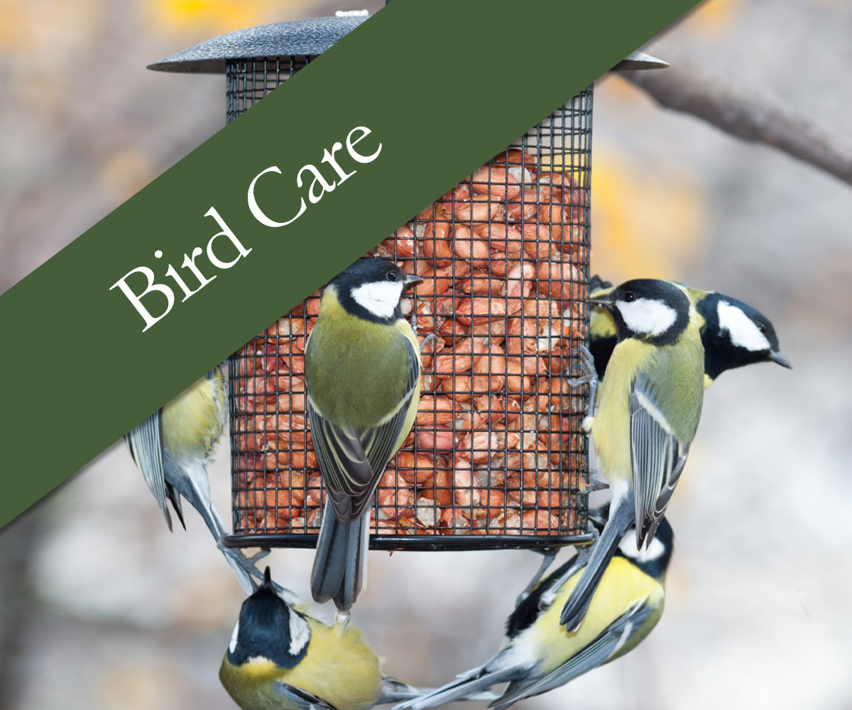 Bird Care - shop online
