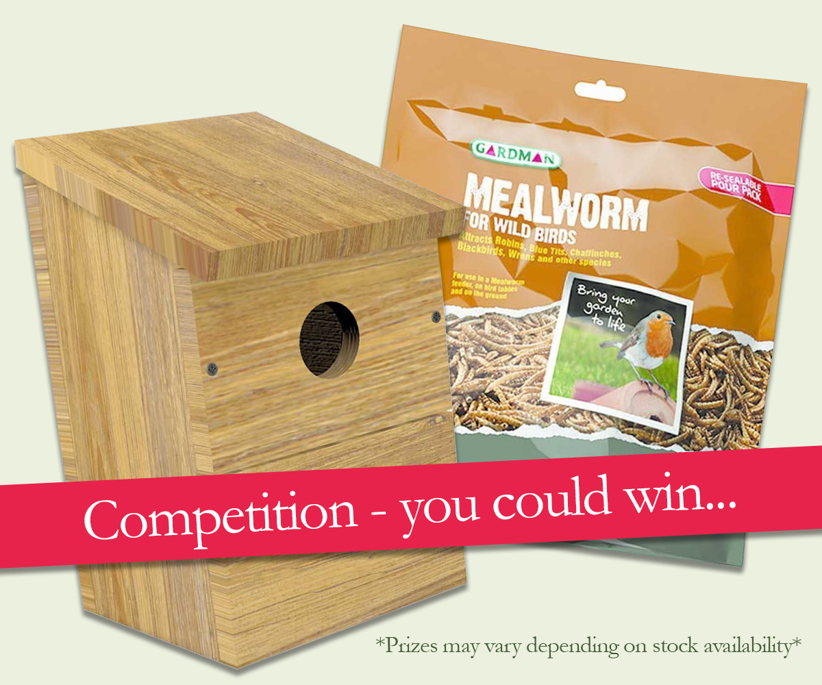 You could win - enter our competition