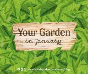 Your garden - January