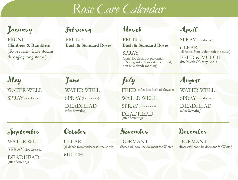 Rose care calendar
