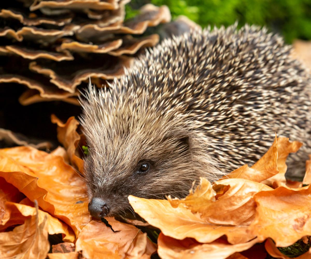 Hedgehog feeders