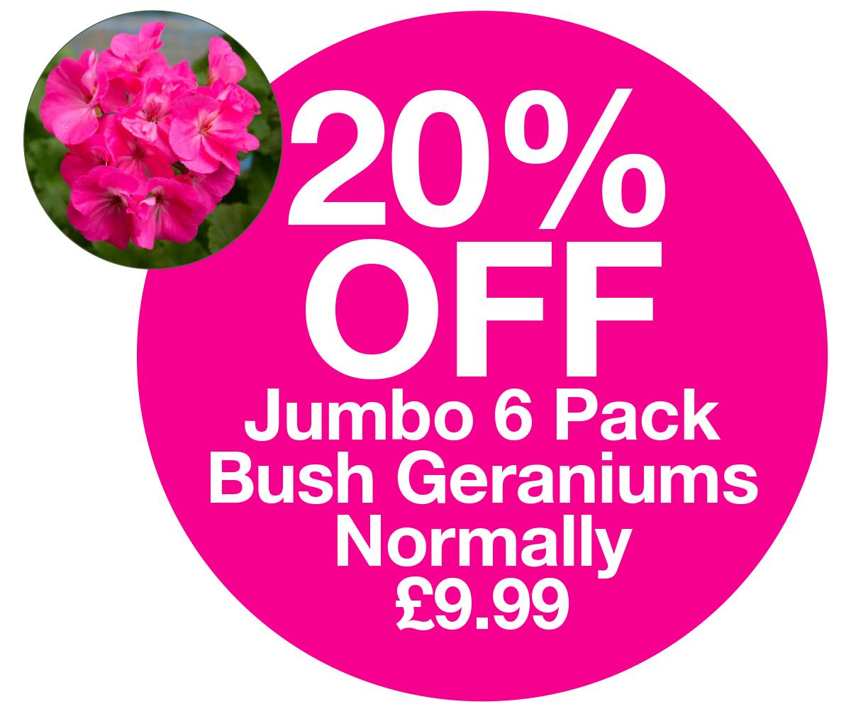 6 pack geraniums 20% off