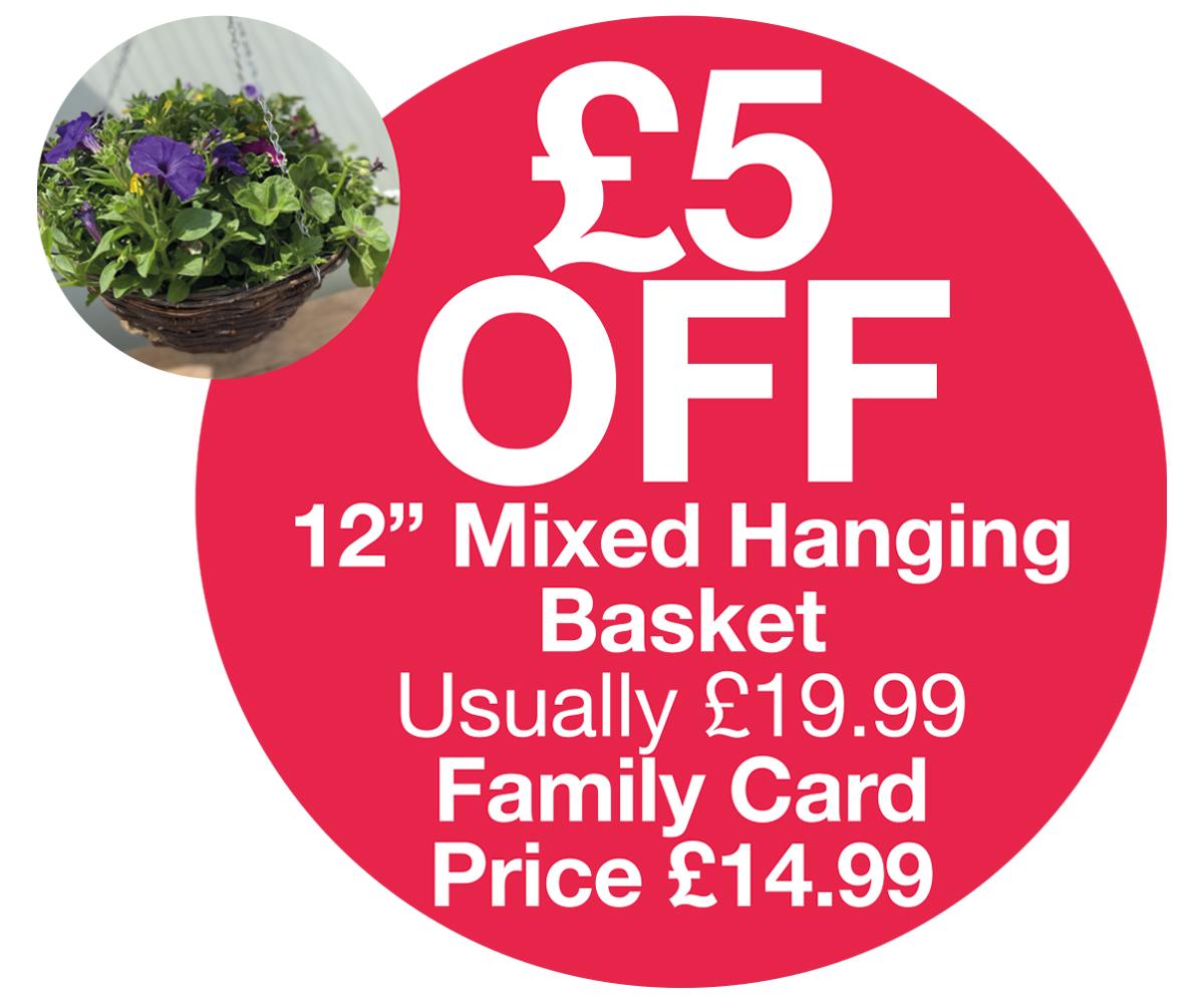 FC Offer - 12inch hanging basket £5 OFF