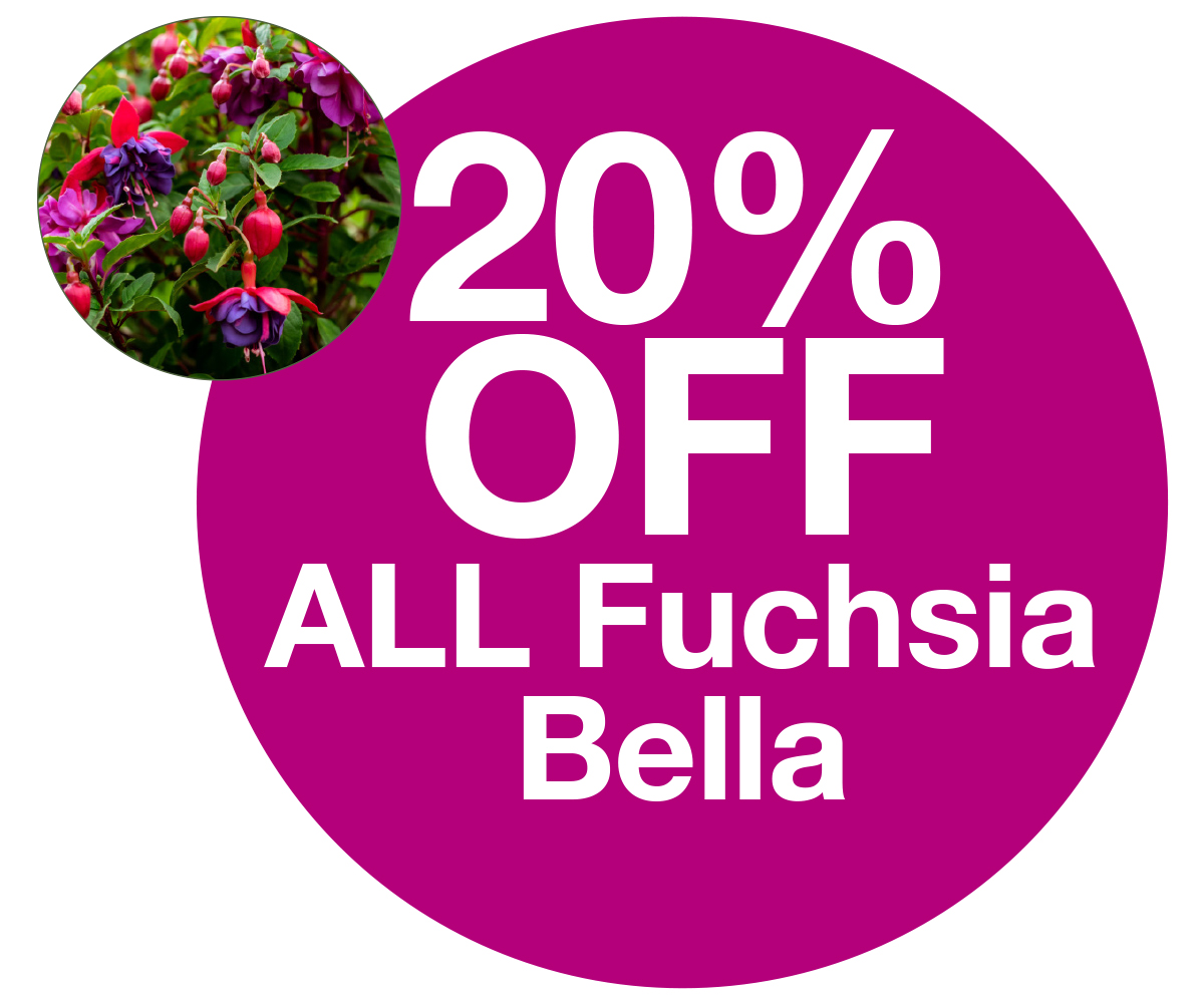 fuchsia bella 20% off