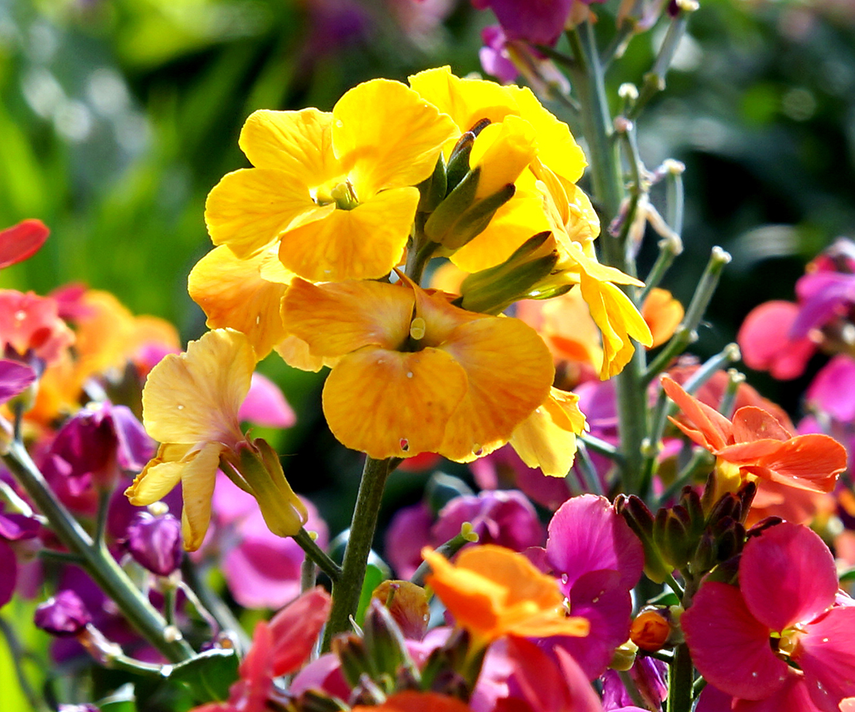 gardening products, home furniture, plants seeds & bulbs