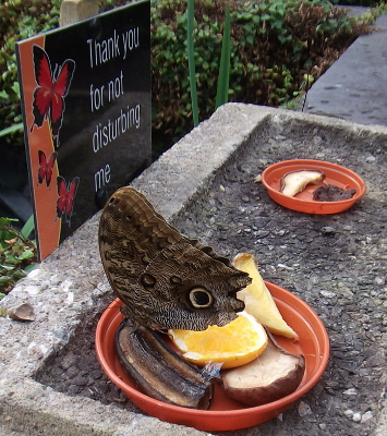 pili palas butterfly house__04052014 (4)