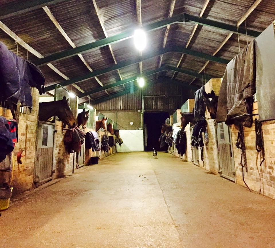Photograph of horses stabled in the retraining Unit