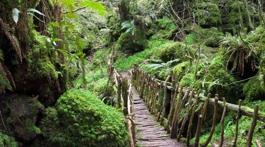 Puzzlewood Tour of Film Locations