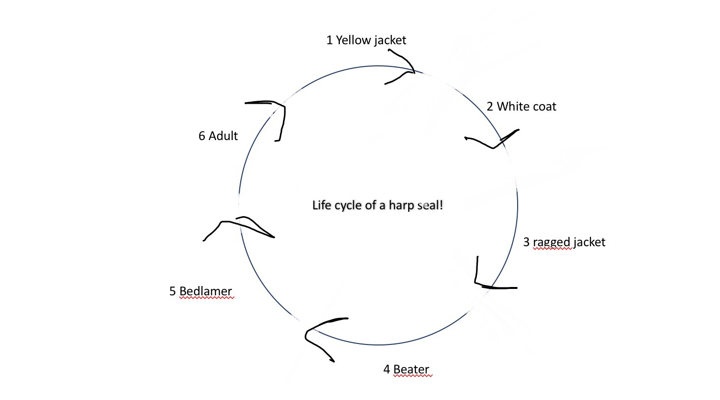 harp seal life cycle diagram att uverse house wiring project 2 mammals  britney 39s blog