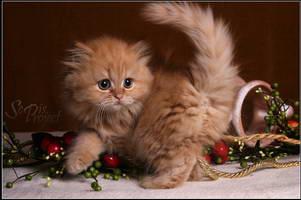 Image result for long-haired kittens