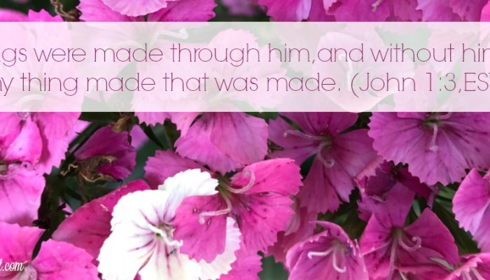 God Makes Good