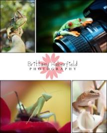 Amazing Frog Demo