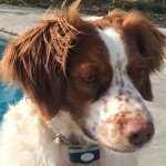 Adopt_Daisy_BRIT_1