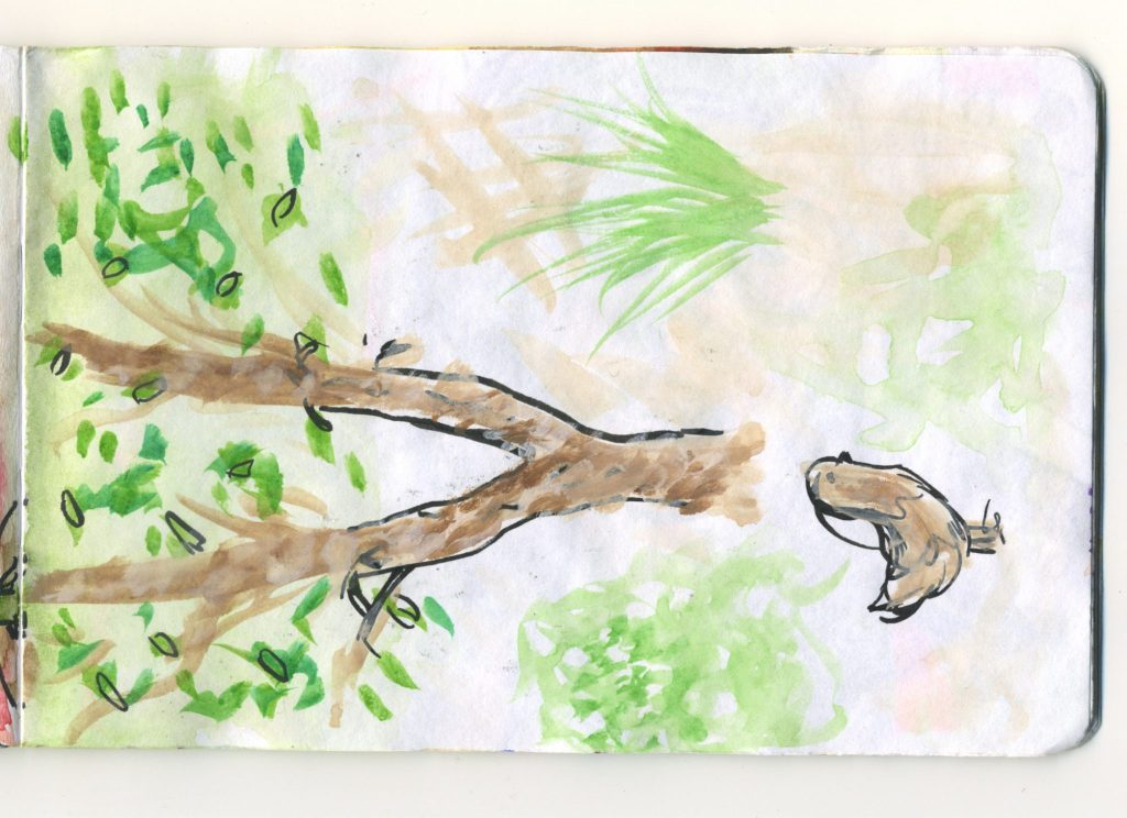 A watercolour sketch of a bird on the ground near a tree.