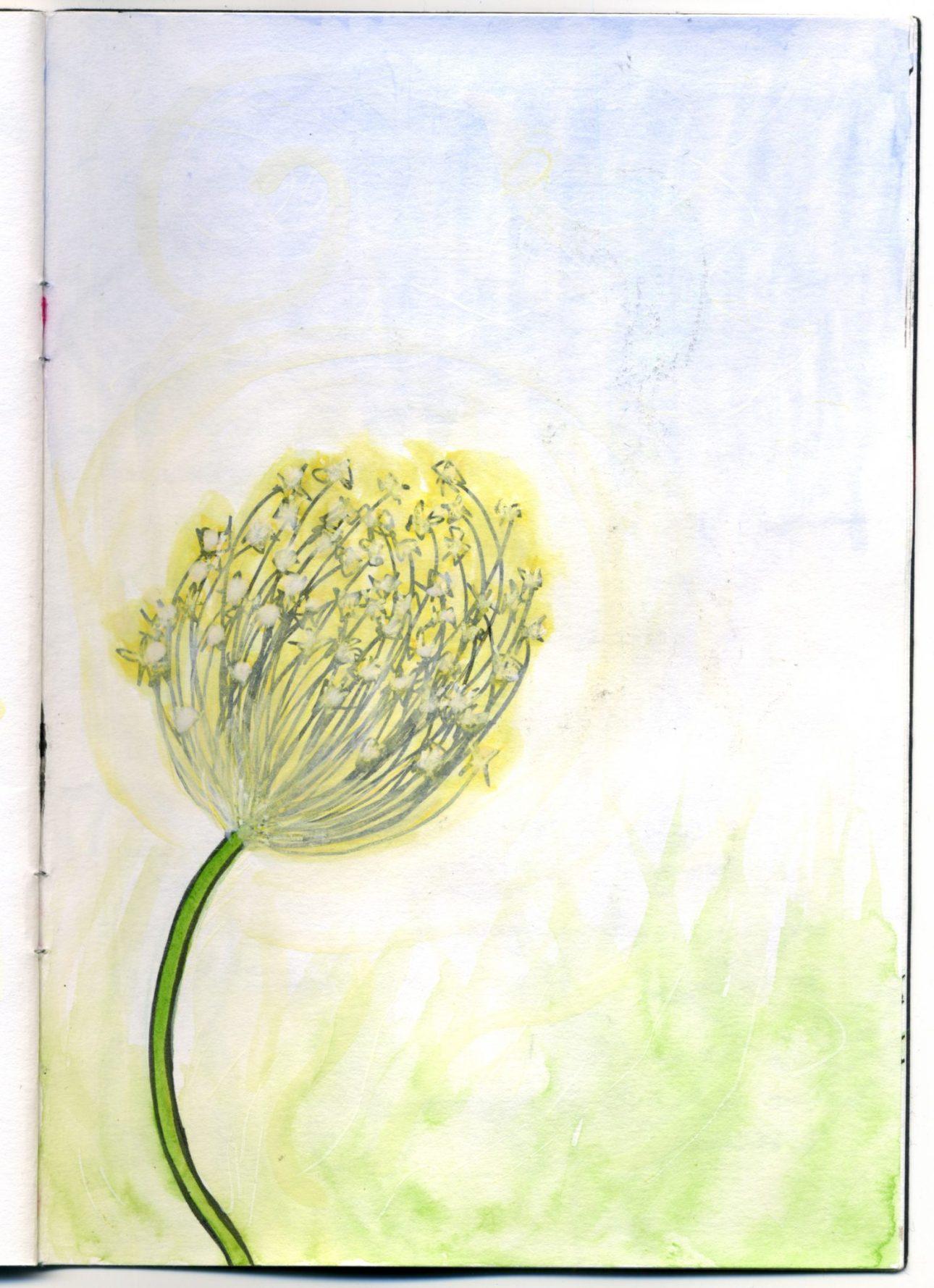 A watercolour sketch of a dandelion.