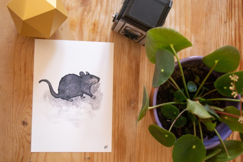 Little Rat Print on a table with a plant and camera.