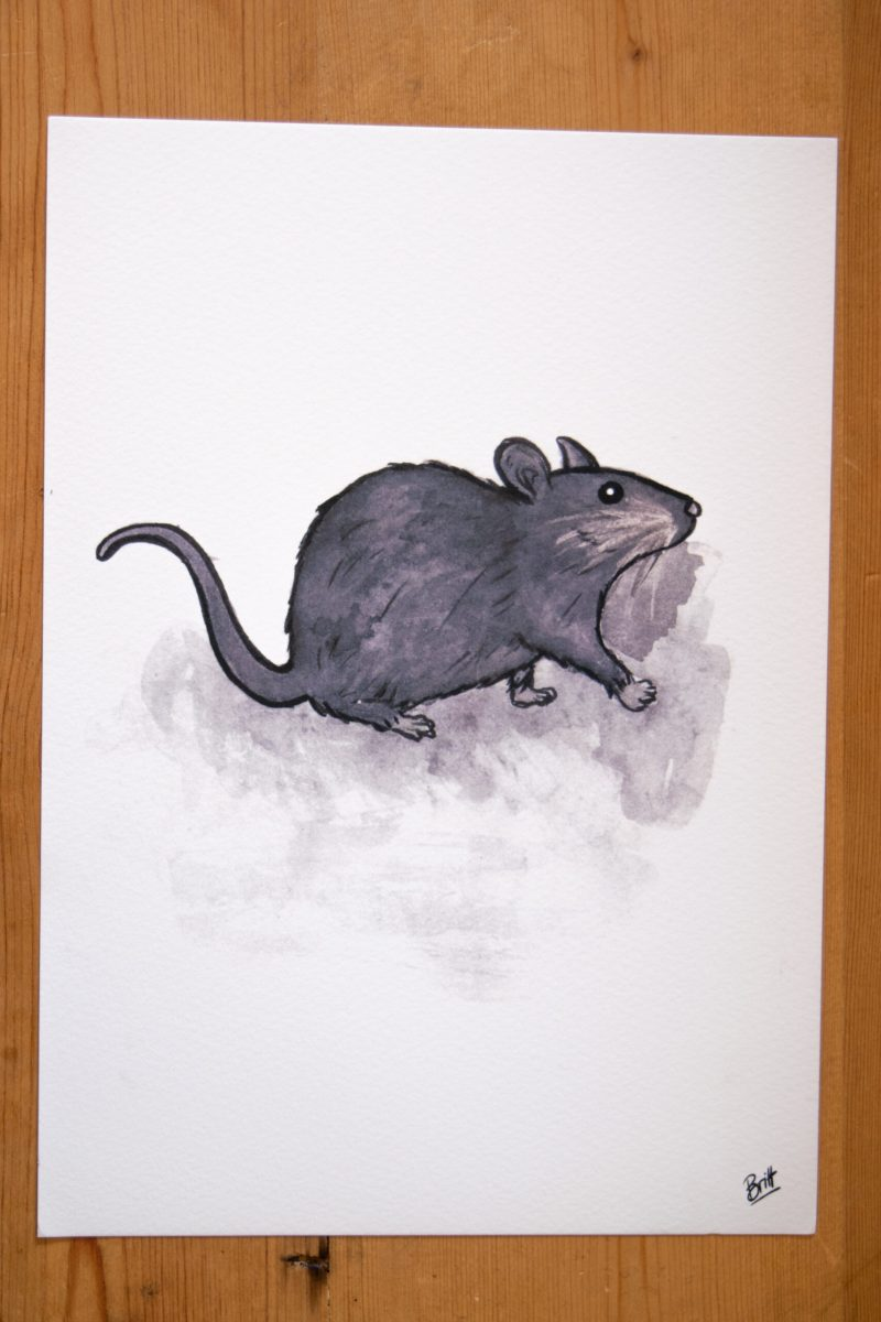 Little Rat Print