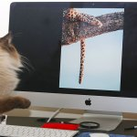 image of cat looking at keyword research