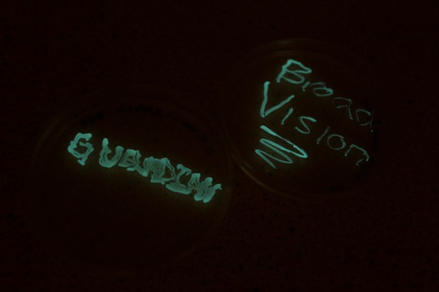 Writing-with-bioluminescent-bacteria