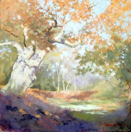 Tree study, Blenheim 2