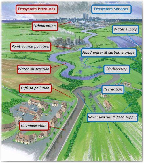 Ecosystem Pressures infographic copyright RRC
