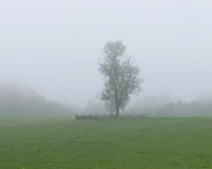 Fred Eberhart, Green Pastures, digital photograph