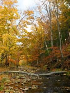 Fred Eberhart, Rapidan River, Autumn, digital photograph